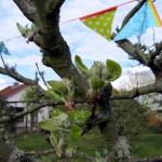 mein Apfelbaum schlägt um sich... ;-)
